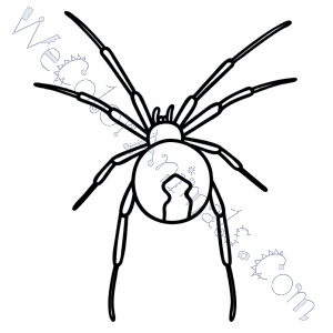 Images of Black Widow Spider Coloring Pages - Sabadaphnecottage