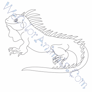 iguana coloring pages - Iguana Coloring Page