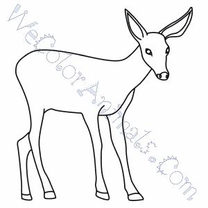 coloring pages mule deer - photo#17