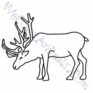 Realistic Reindeer Coloring Page Realistic Reindeer Col...