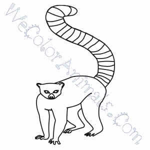 Ring Tailed Lemur Coloring Pages