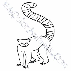 Free Lemur Coloring Pages | 300x300