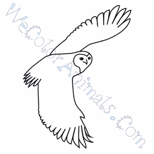 Free Printable Owl Coloring Pages For Kids Cool2bKids - jeffersonclan | 300x300