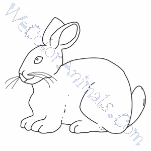 Angora Rabbit Coloring Pages