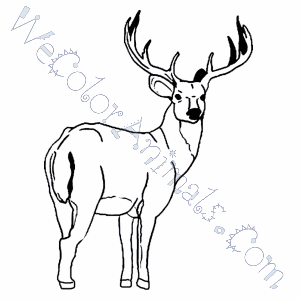 Buck (Male Deer) Coloring Page | 300x300