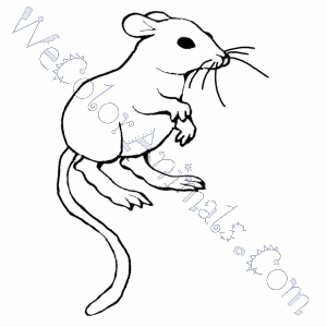 Rats coloring pages   Free Coloring Pages   300x300