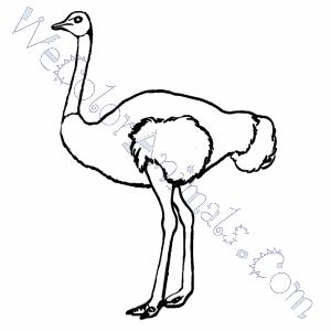 ostrich coloring pages - Ostrich Coloring Page