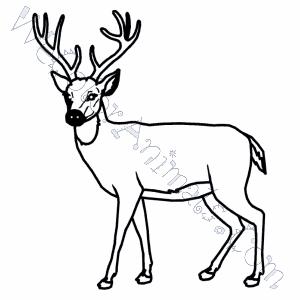 whitetail coloring pages - photo#4