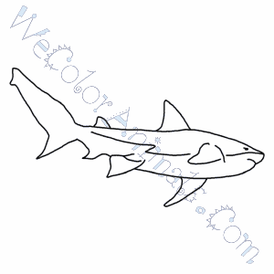 Bull Shark Coloring Pages