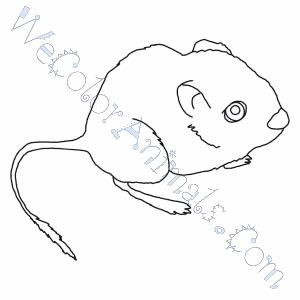 Kangaroo Rat Coloring Pages