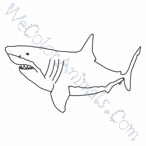 Megalodon Shark Coloring Pages
